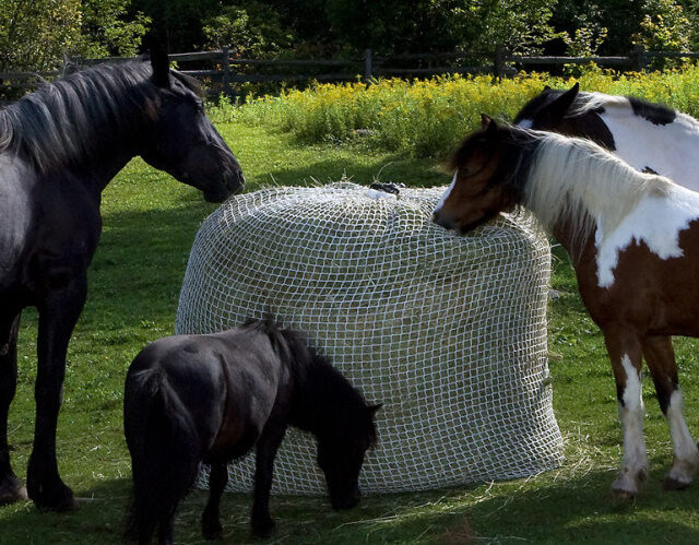 the damage horse feeders design for steel horses your comparison what grate slow to listen feeder best hay is