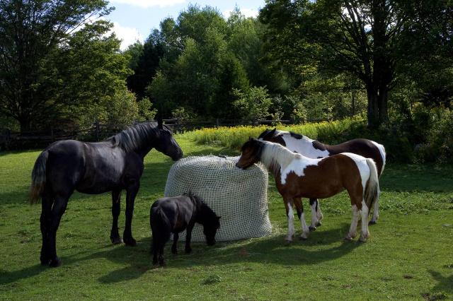 Big Bale Buddy Pasture Feeder